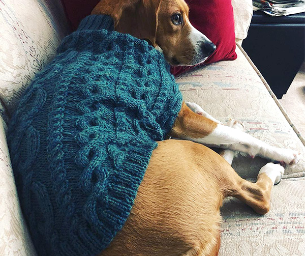 D24 KNITTING PATTERN FOR DOG COAT ~ MULTI SIZE PATTERN~ EASY TO MAKE